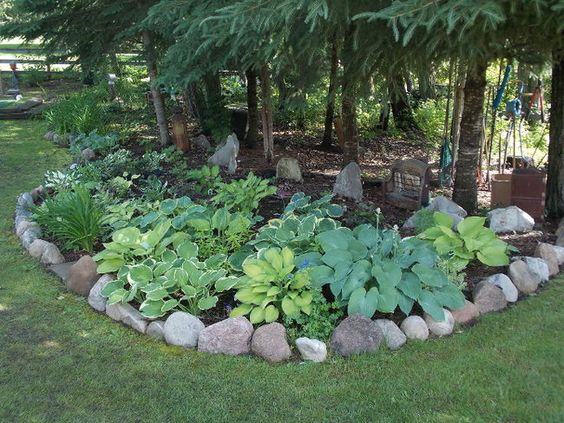 What To Grow Under Spruce Trees Alberta Google Search