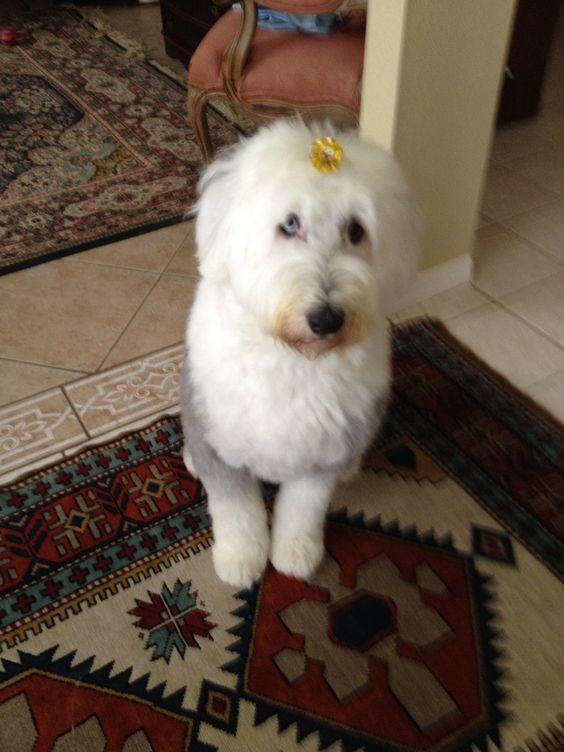 Molly has had a haircut (OES)