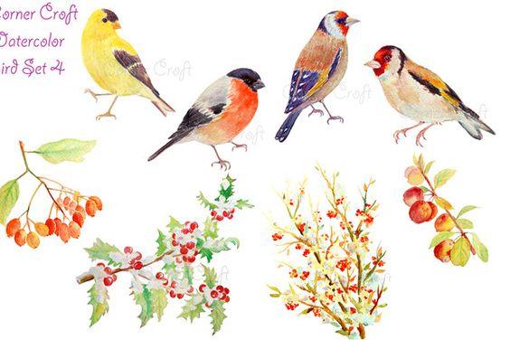 Watercolor Goldfinch Bullfinch