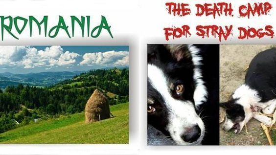 Petition · Romania, stop euthanasia of stray dogs! · Change.org