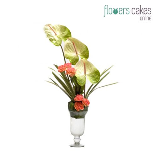 Buy And Send Anthuriums Online Delivery Services In India Of Any Occasion With Free Shipping And Same Day Delivery Op Flowers Online Anthurium Flower Delivery