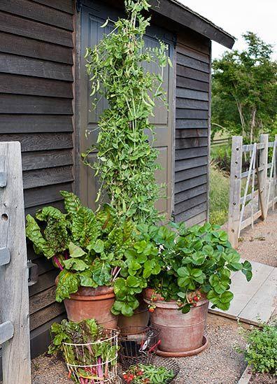 Growing edibles in small spaces allen 39 s blog p allen smith garden home garden thoughts - P allen smith container gardens ...