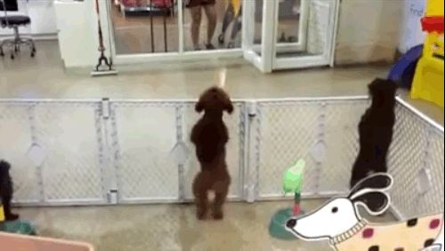 Back in December, this video of one happy puppy getting excited to see his human went viral.