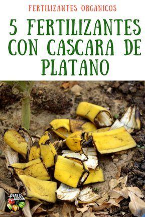 5 Fertilizantes Con Cascara De Plátano Más Frutos Potasio Cosas Del Jardin Plantas De Banano Abono Natural Para Plantas Plantas De Tomate