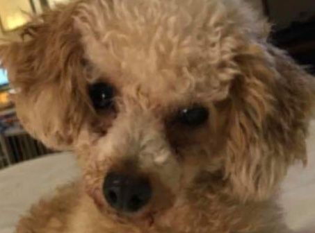 Dogs For Adoption Near Toronto On Petfinder Dog Adoption Pet Care Tips Pet Adoption