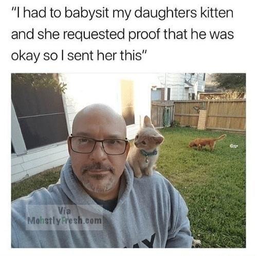 54 Fresh Memes Guaranteed To Make You Laugh Funny Animals Funny Cats Cute Animals