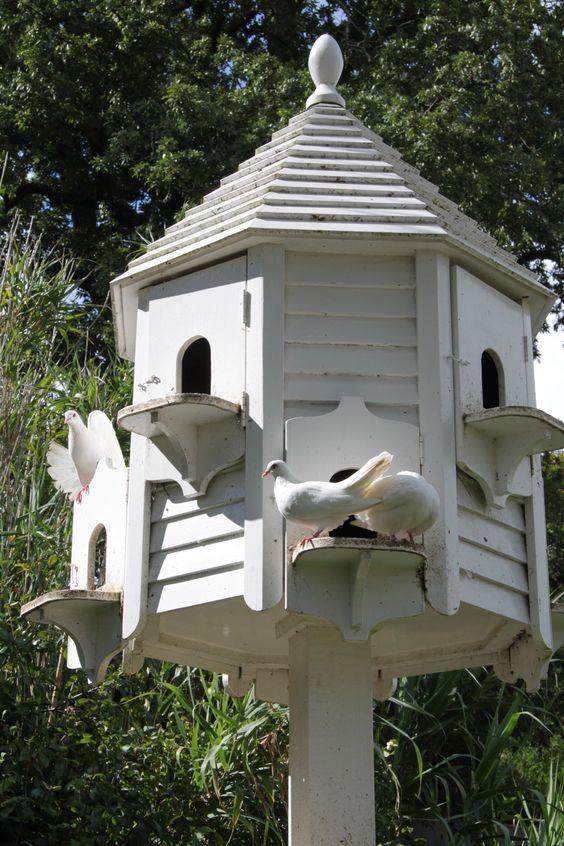 Pinterest the world s catalog of ideas for Dove bird house plans