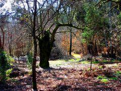 carvalhal de Vila Facaia (pintor joao viola) Tags: forest landscape agua floresta outono leiria pedrogaogrande joaoviola