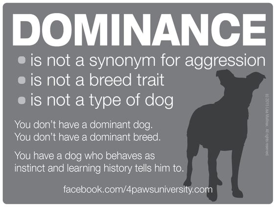 Dominance - to read more about this - it's too long to cut and paste, check out the Facebook page - https://www.facebook.com/4pawsuniversity/photos/a.137573622069.109578.49741042069/10153098026907070/?type=1&theater