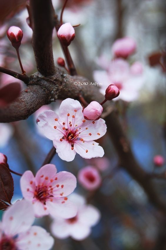 Pin By Svetlana Mishina On Cveta Kraski In 2020 Wonderful Flowers Flowers Photography Love Flowers