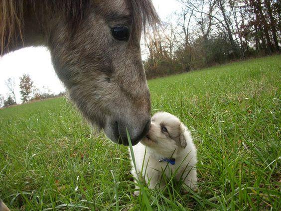 Cette petite boule qui a un nouvel ami!