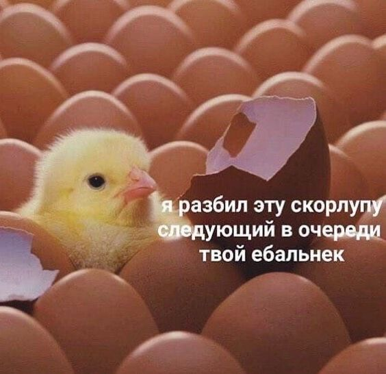 https://i.pinimg.com/564x/cc/2e/3a/cc2e3a28a4da2d0a37e65a588c52b3b7.jpg