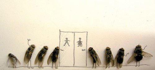 moscas 5