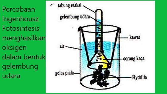 Percobaan Ingenhousz Fotosintesis Tabung Reaksi Rumus Kimia