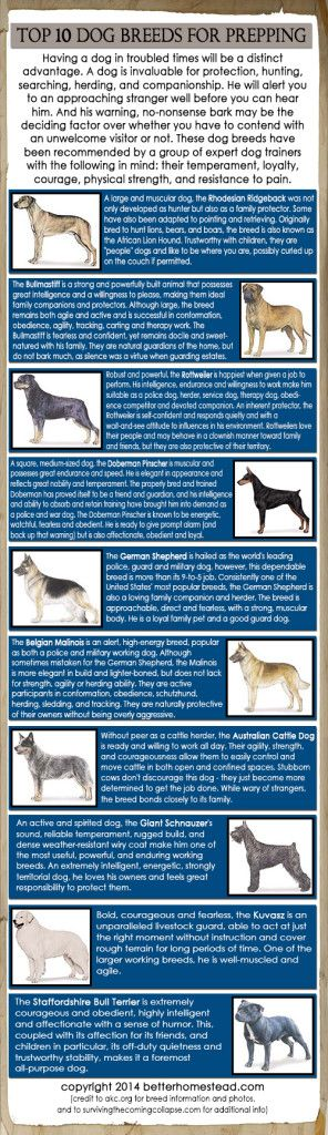 TOP 10 DOG BREEDS FOR PREPPING