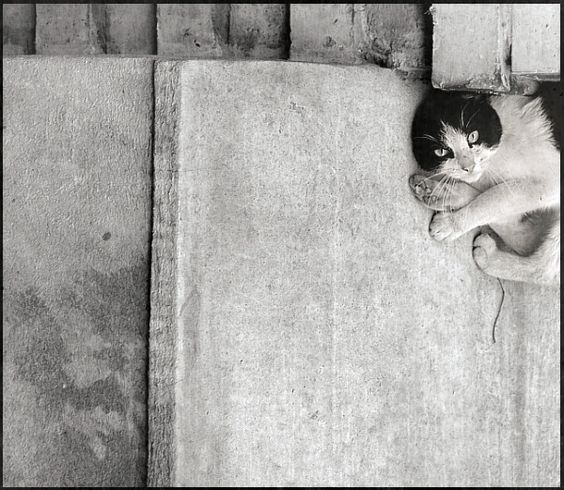 Cat, photography by Norbert Ptak