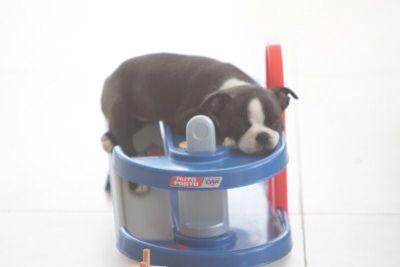 Minha cachorrinha Hara quando pequena adorava ficar dormindo nessa pista para carrinhos .....:-)