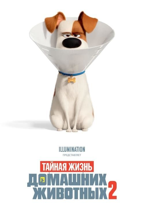 Hd 1080p The Secret Life Of Pets 2 full movie Hd1080p Sub English Secret Life Of Pets Secret Life Full Movies