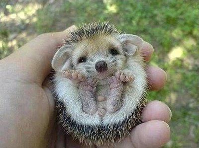 [Imágenes] Animales bebes - Taringa!