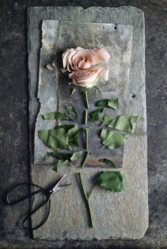 La última rosa del verano quedó floreciendo sola; todas sus preciosas compañeras están descoloridas y se han ido: ninguna flor de su parentela, ningún capullo está cerca, para reflejar sus rubores, o dar el suspiro para el suspiro.   Thomas Moore