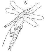 [.:Slo:.]-De la larve .... à la libellule