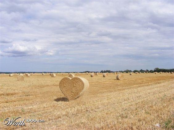 wheat-photoshopped
