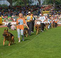 Verein für Deutsche Schäferhunde (SV) e.V.: Zuchtschauen