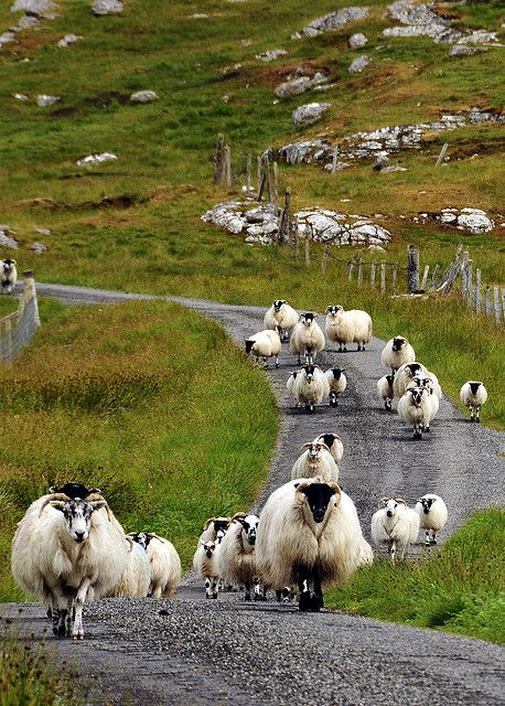 One way traffic on Isle of Lewis. Lewis is the largest island of the Outer Hebrides of Scotland. Version Voyages