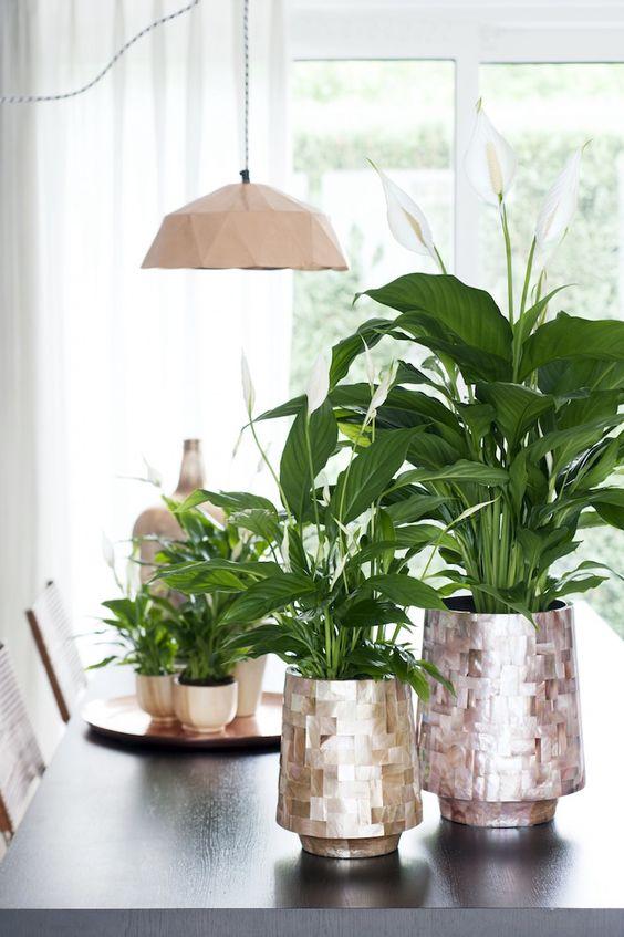 El ESPATIFILO es una planta que además de decorar está dentro de las cinco plantas que más depuran el aire de interior