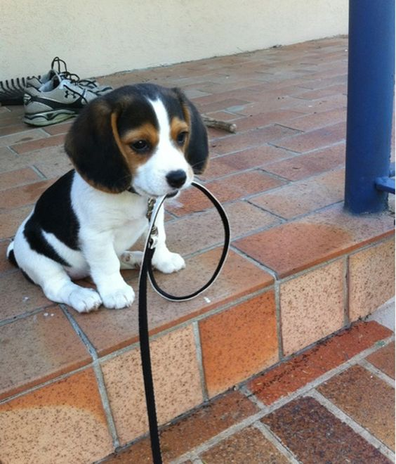 I'll just wait here until you're ready to walk me, okay?