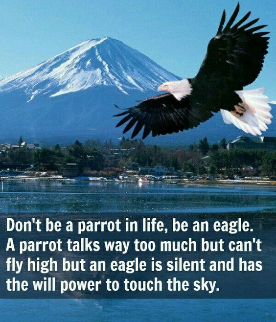 Love eagles!