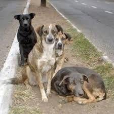 perros callejeros lindos - Buscar con Google