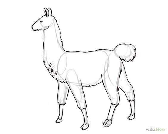 How to Draw a Llama: 6 Steps - wikiHow