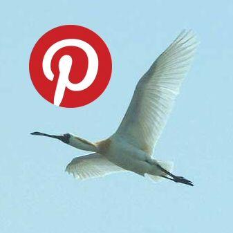 미시령에서 on Pinterest (Began March 22, 2014) ▶ http://www.pinterest.com/misiryeong