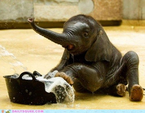 I think whoever thought it was a good idea to let this widdle baby elephant bathe himself should have to clean up this mess...