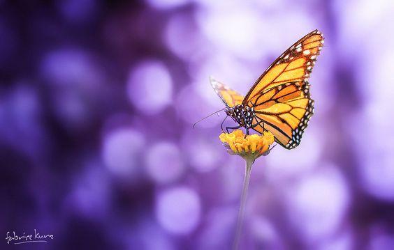 Butterfly - Merci à tous pour vos commentaires.