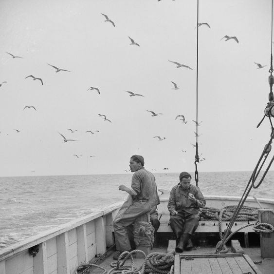 1000  images about The Magesty of the Wild Ocean ...... on Pinterest