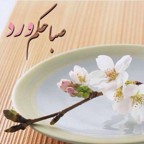 اجمل صباحيات صباحيات جميلة اجمل الصور الصباحية Zina Blog Love Flowers Greetings Flowers