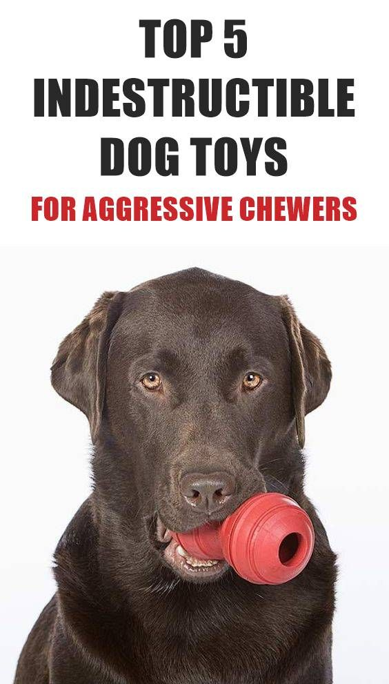 Does Your Dog Love To Chew Looking For An Indestructible Dog Toy