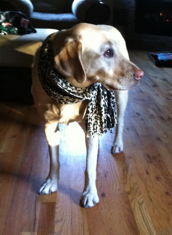 Sadie being a fashionista and a good sport! And zero treats involved.