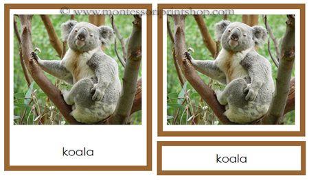 Australia/Oceania Animals: 18 photographs of the Animals of Australia/Oceania/Australasia in 3-Part Cards.