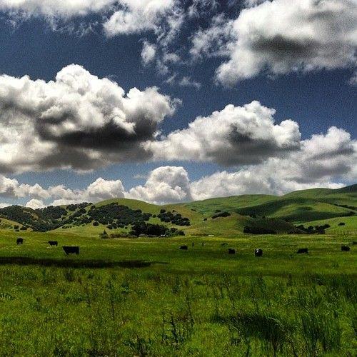 #Orinda Hills