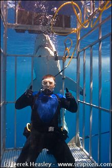 Shark Diving: This would be so scary but pretty sweet!... I think...