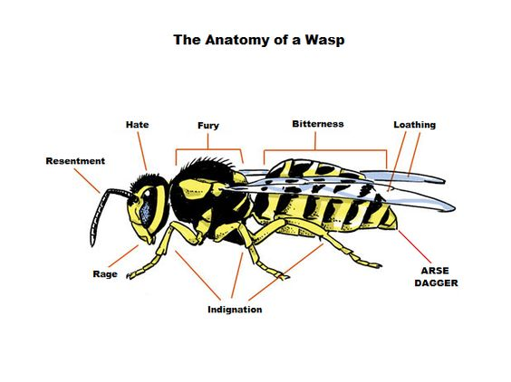 This wasp may or may not be the Africanized big angry brother of the Africanized bee.  Be sure to insult his mother.