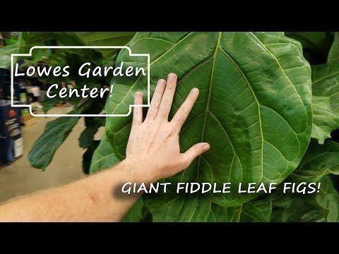 Shopping At Lowes Garden Center Lowe S Garden Center Fiddle