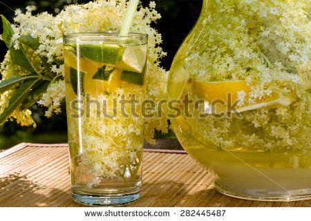 Elderberry Stock Photos, Images, & Pictures | Shutterstock