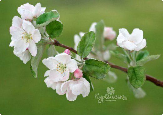 Флористика искусственная Лепка Цветущая яблоня из полимерной глины Фарфор холодный фото 1