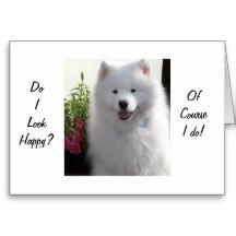 """SAMOYED SAYS HAPPY THAT YOU ARE """"21"""" GREETING CARD"""