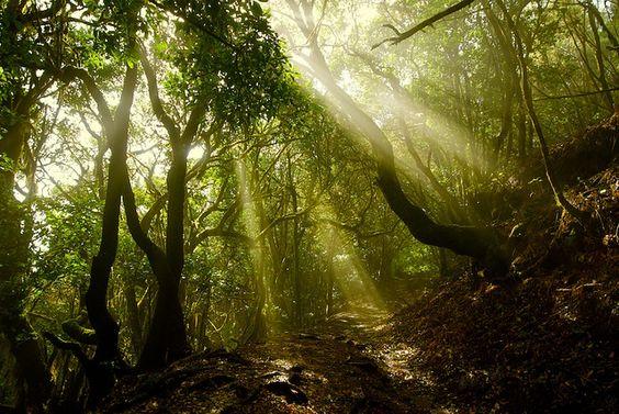 Parque Nacional de Garajonay by Viajar sin Destino, via Flickr