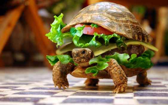 Chinese Man Tries To Smuggle His Pet Turtle On a Plane Disguised as a Hamburger